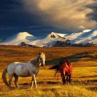 Mongólia - körutazások!!!
